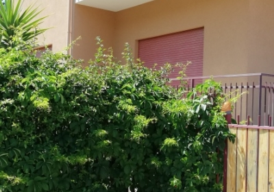 Casa Vacanze Appartamento Familyholidays Magnolia